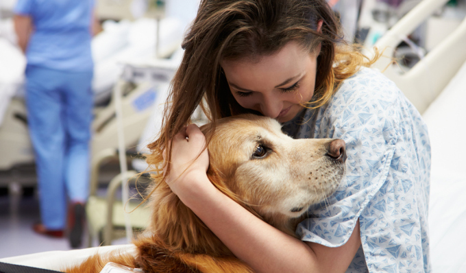 What to Expect from Pet-Friendly Rehab Facilities