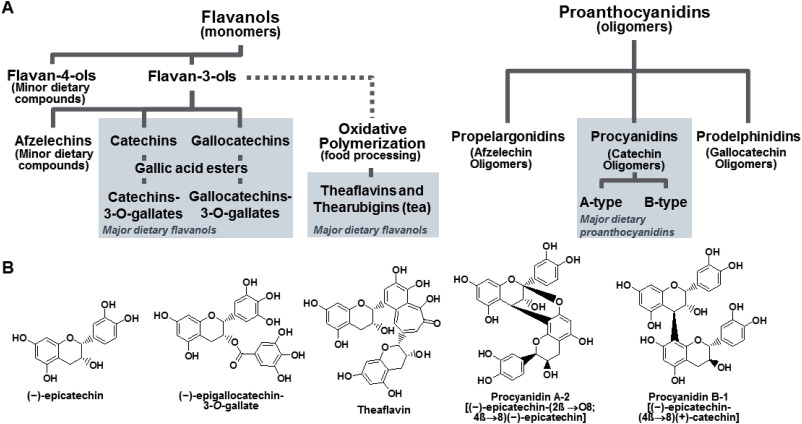 What are actually flavanols?